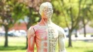 Méridiens et points d'acupuncture